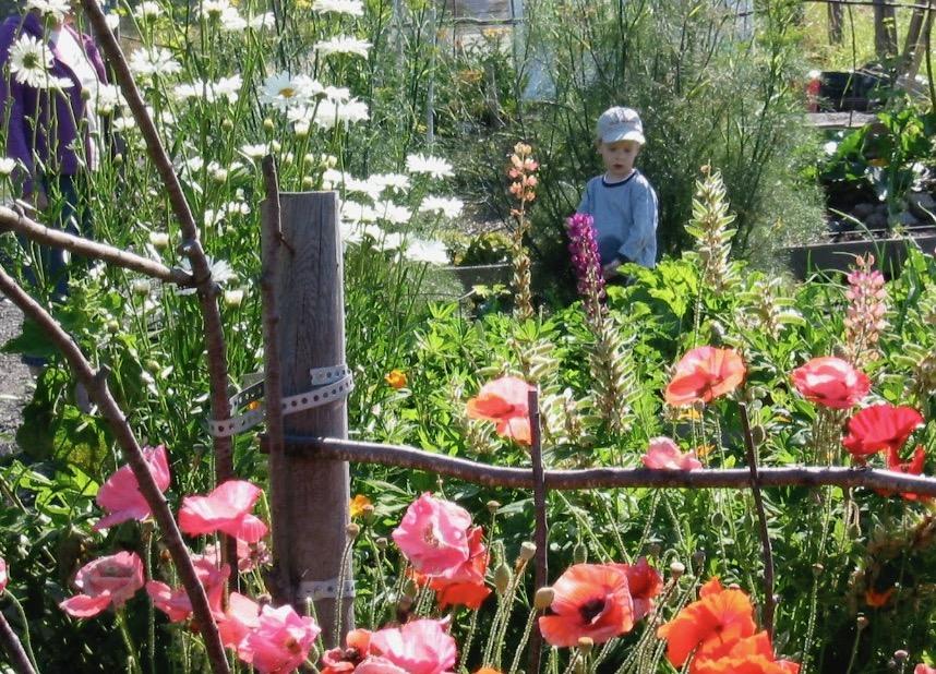 Yvonne creates twig fence
